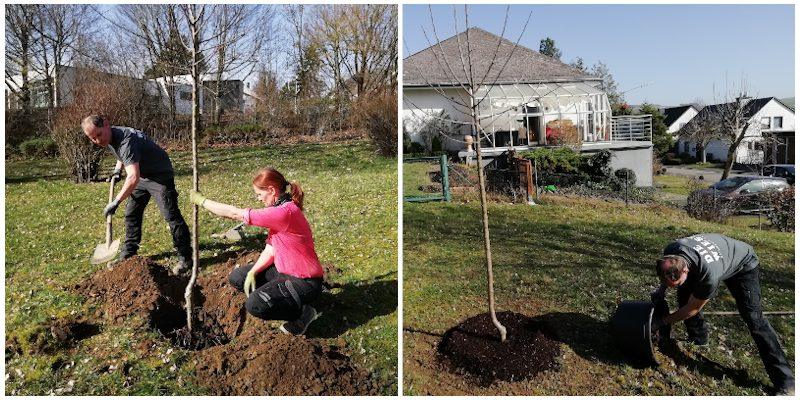 Apfelbaum gepflanzt